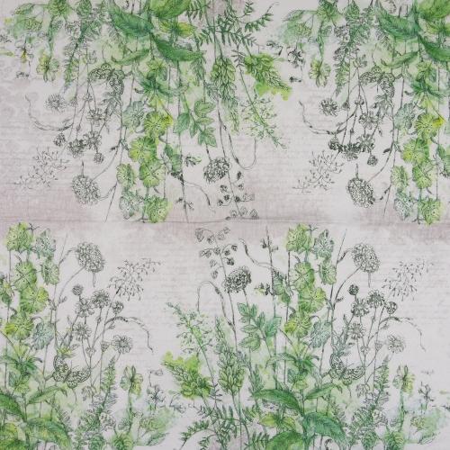 Serwetka - rośliny